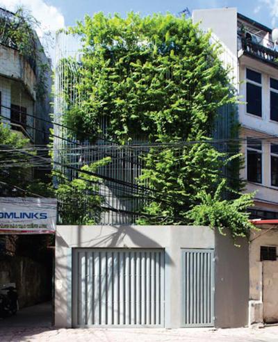 Sửa chữa nhà 4 tầng thành không gian xanh mướt
